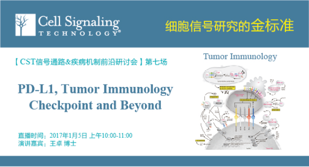 PD-L1,Tumor Immunology Checkpoint and Beyond